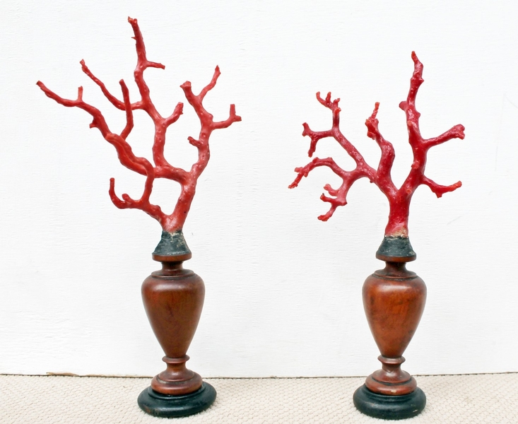 Pair of red coral on turned wood